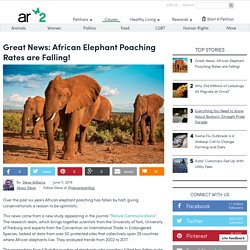 Great News: African Elephant Poaching Rates Are Falling!