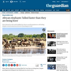 African elephants 'killed faster than they are being born'