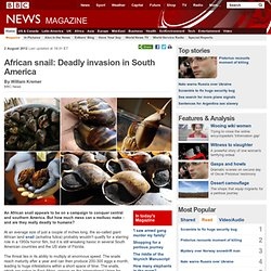 BBC 02/08/12 African snail: Deadly invasion in South America