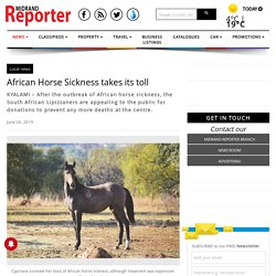 MIDRANDREPORTER_CO_ZA 26/06/19 African Horse Sickness takes its toll