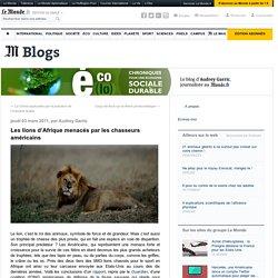 Les lions d'Afrique menacés par les chasseurs américains