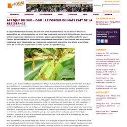 AFRIQUE DU SUD - OGM: le foreur du maïs fait de la résistance