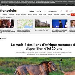 La moitié des lions d'Afrique menacés de disparition d'ici 20 ans