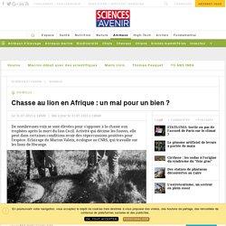Chasse au lion en Afrique : un mal pour un bien ? - Sciencesetavenir.fr