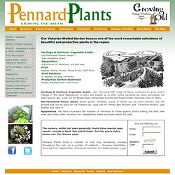 Pennard Plants Agapanthus, Heritage Seeds, South African Rarities
