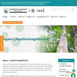 AGARU (Aquilariaagallocha) -
