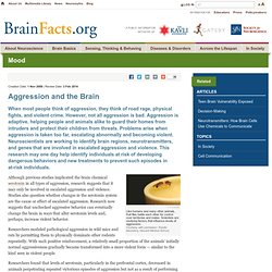 Aggression and the Brain
