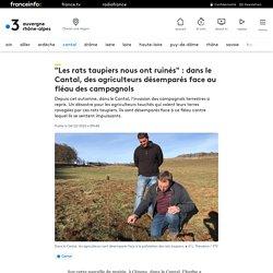 """FRANCE 3 04/12/20 """"Les rats taupiers nous ont ruinés"""" : dans le Cantal, des agriculteurs désemparés face au fléau des campagnols"""