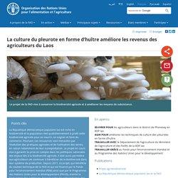 FAO - NOV 2015 - La culture du pleurote en forme d'huître améliore les revenus des agriculteurs du Laos