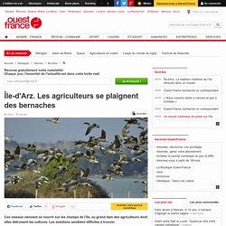 Île-d'Arz. Les agriculteurs se plaignent des bernaches