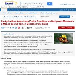 La Agricultura Estadounidense Podría Erradicar las Mariposas Monarca