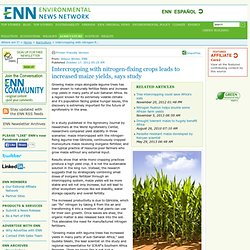 Intercropping with nitrogen-fixing crops leads to increased maize yields, says study
