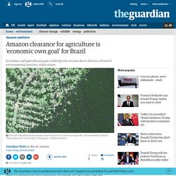 Amazon clearance for agriculture is 'economic own goal' for Brazil