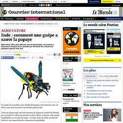 Inde: comment une guêpe a sauvé la papaye