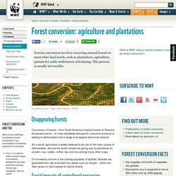 Forest conversion: agriculture and plantations