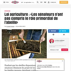 Loi agriculture: «Les sénateurs n'ont pas compris le rôle primordial de l'abeille»
