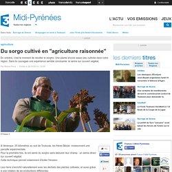 """Du sorgo cultivé en """"agriculture raisonnée"""""""