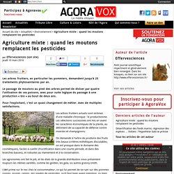 Agriculture mixte : quand les moutons remplacent les pesticides