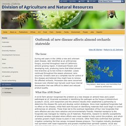 UNIVERSITY OF CALIFORNIA - Outbreak of new disease affects almond orchards statewide
