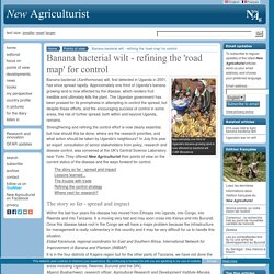 NEW AGRICULTURIST - SEPT 2006 - Banana bacterial wilt - refining the 'road map' for control
