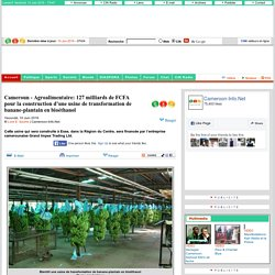 Cameroun- Agroalimentaire: 127 milliards de FCFA pour la construction d'une usine de transformation de banane-plantain en bioéthanol