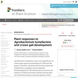 FRONT. PLANT SCI. 23/04/14 Plant responses to Agrobacterium tumefaciens and crown gall development