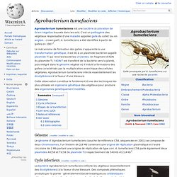 WIKIPEDIA - Agrobacterium tumefaciens.