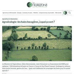 Agroécologie : les haies bocagères, à quoi ça sert ?