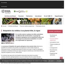 INRA BORDEAUX 26/03/15 Adaptation à la plante-hôte ou durabilité de la résistance de la vigne au mildiou