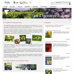 UMR 1065 Santé végétale