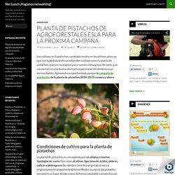 Planta de pistachos de Agroforestales ESLA para la próxima campaña - Net Lunch ¡Hagamos networking!