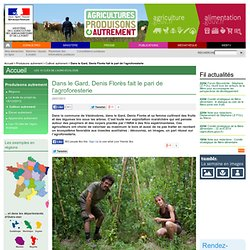 Dans le Gard, Denis Florès fait le pari de l'agroforesterie