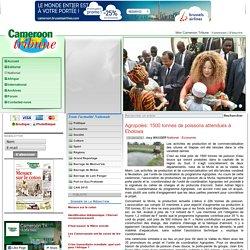 Agropoles: 1500 tonnes de poissons attendues à Ebolowa