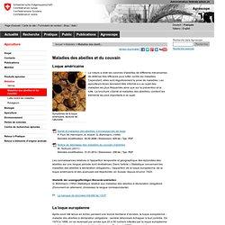 Maladies des abeilles et du couvain