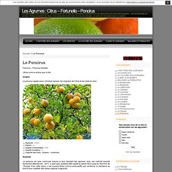 Les Agrumes : Citrus – Fortunella – Poncirus » Le Poncirus