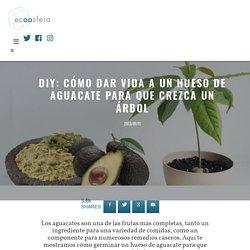 DIY: cómo dar vida a un hueso de aguacate para que crezca un árbol - Ecoosfera