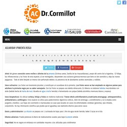 Aguaribay (pimienta rosa) - Dr. Alberto Cormillot