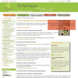 Aide à l'identification d'une plante