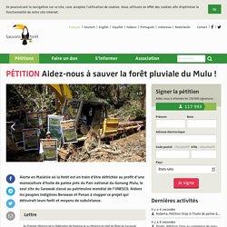 Aidez-nous à sauver la forêt pluviale du Mulu!