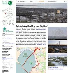 Baie de l'Aiguillon (Charente-Maritime)