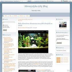 Ryby akwariowe akwarystyczne rybki zbrojniki sa niezle - Akwarystyka ryby Blog