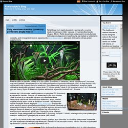 Akwarystyka's Blog - Bravenet Blog