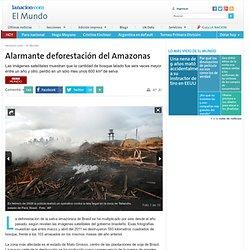 Alarmante deforestación del Amazonas