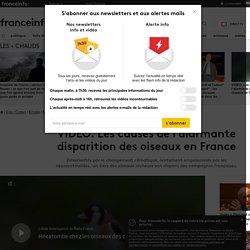 VIDÉO. Les causes de l'alarmante disparition des oiseaux en France
