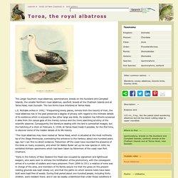 Royal albatross, Diomedea epomorphora
