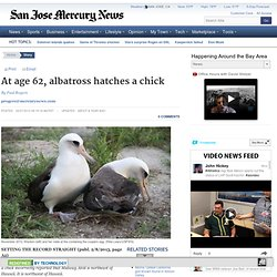 At age 62, albatross hatches a chick