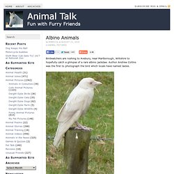 Albino Animals — Animal Talk - StumbleUpon