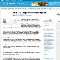 Alert: GMO oranges now under development