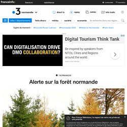 FRANCE 3 25/11/19 Alerte sur la forêt normande (changement climatique)