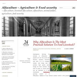 Why Alfaculture Is The Most Practical Solution To Feed Livestock?